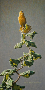 "SOLD ""Twist and Shout - Yellow Warbler"" by W. Allan Hancock 7 x 14 - acrylic $1050 Unframed $1250 in show frame"