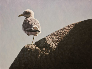 "SOLD ""Balance – Mew Gull,"" by W. Allan Hancock 9 x 12 – acrylic $1150 Unframed $1390 Custom framed"