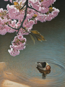 "SOLD ""Below the Blossoms – Mallard Duck,"" by W. Allan Hancock 18 x 24 – acrylic $2500 Unframed"