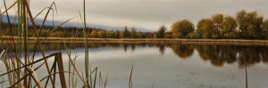 "SOLD ""Beyond the Reeds – Buttertubs Marsh,"" by Ray Ward 12 x 36 – oil $2080 Unframed $2430 Custom framed"