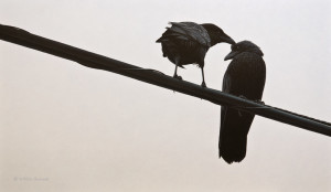 "SOLD ""Black & Blue – Northwestern Crow and Young,"" by W. Allan Hancock 14 x 24 – acrylic $2000 Unframed"