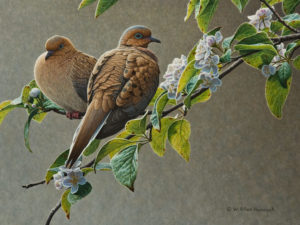 "SOLD ""Blossoming – Mourning Doves,"" by W. Allan Hancock 12 x 16 – acrylic $2500 Unframed (price includes an Executive Edition stamp, limited edition print (3/150) and gold medallion)"