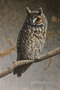 "SOLD ""Daytime Dozing - Long-eared Owl,"" by W. Allan Hancock 6 x 9 - acrylic $650 Unframed"