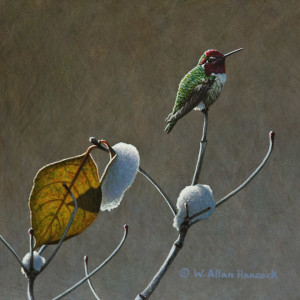 "SOLD ""Gold and Jewels – Anna's Hummingbird,"" by W. Allan Hancock 8 x 8 – acrylic $750 Unframed"