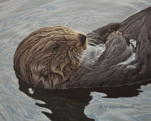 """Laid Back - Sea Otter,"" by W. Allan Hancock 8 x 10 - acrylic $975 Unframed"