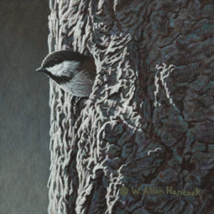"SOLD ""Light of Day – Chestnut-backed Chickadee,"" by W. Allan Hancock 6 x 6 – acrylic $500 Unframed"
