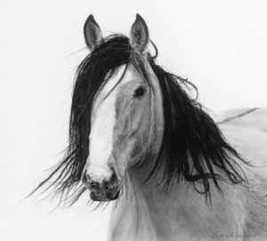 "SOLD ""Spirit,"" by Jim Nedelak 7 x 7 1/2 - charcoal drawing $900 Framed"
