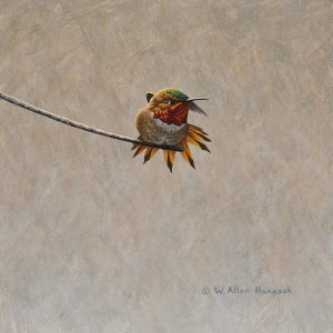 "SOLD ""Swordplay – Rufous Hummingbird 1,"" by W. Allan Hancock 8 x 8 – acrylic $750 Unframed"