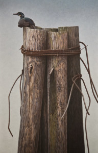 "SOLD ""Tar & Feathered - Brandt's Cormorant,"" by W. Allan Hancock 24 x 37 1/2 - acrylic $4500 Unframed"