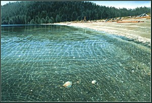 """Shells in the Shallows,"" by Carol Evans 19 x 28 - Giclée on paper (edition size of 195) $495 Unframed 21 1/2 x 32 - Giclée on canvas (edition size of 100) - $675 Unframed"