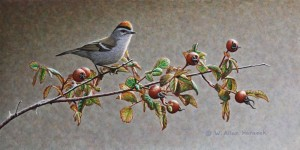 "SOLD ""Golden-crowned Kinglet and Rosehips"" by W. Allan Hancock 6 x 12 - acrylic $800 Unframed $965 in show frame"