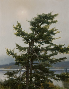 "SOLD ""Douglas Fir - Study"" by Renato Muccillo 7 x 9 - oil $2020 in show frame"