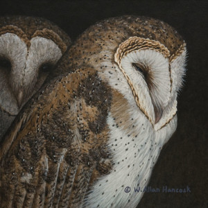"SOLD ""Quiet Corner - Barn Owls"" by W. Allan Hancock 7 x 7 - acrylic $650 Unframed $835 in show frame"