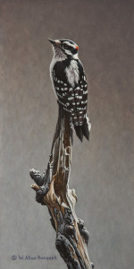 "SOLD ""Stop and Go - Downy Woodpecker"" by W. Allan Hancock 7 x 14 - acrylic $1050 Unframed $1260 in show frame"