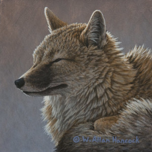 "SOLD ""Swift Fox No. 1"" by W. Allan Hancock 6 x 6 - acrylic $500 Unframed $675 in show frame"