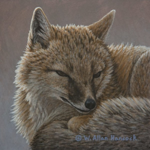 """Swift Fox No. 2,"" by W. Allan Hancock 6 x 6 - acrylic $500 Unframed"