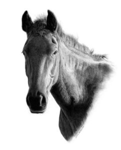 "SOLD ""Scarlett - Bell Ranch Mare,"" by Jim Nedelak 9 x 11 - charcoal drawing $1550 Custom framed"