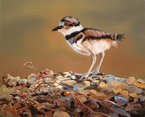 "SOLD ""Killdeer Chick"" 8 x 10 - oil $700 Framed"
