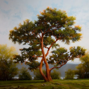 "SOLD ""Madrone"" 36 x 36 - oil $7400 with custom show frame $6520 standard frame"