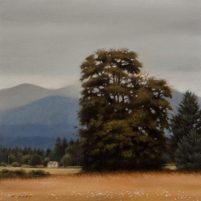"SOLD ""The Old Oak,"" by Ray Ward 8 x 8 - oil $660 Unframed $810 Custom framed"