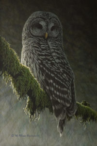 "SOLD ""Forest Light - Barred Owl,"" by W. Allan Hancock 8 x 12 - acrylic $1050 Unframed $1275 in show frame"