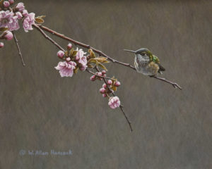 "SOLD ""For the Moment - Rufous Hummingbird,"" by W. Allan Hancock 8 x 10 - acrylic $900 Unframed $1100 in show frame"