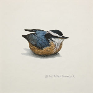 "SOLD ""Red-breasted Nuthatch 1,"" by W. Allan Hancock 6 x 6 - acrylic $500 Unframed $630 in show frame"