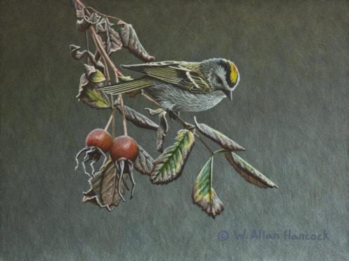 "SOLD ""Autumn Reign - Golden-crowned Kinglet,"" by W. Allan Hancock 6 x 8 - acrylic $785 in show frame $600 Unframed"