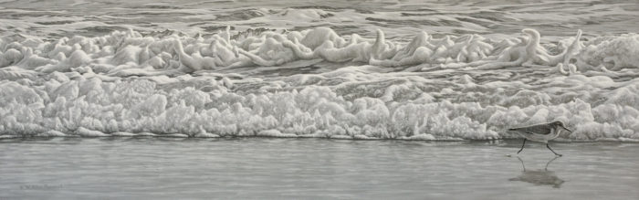 "SOLD ""Beach Run - Sanderling (winter plumage),"" by W. Allan Hancock 12 x 38 - acrylic $3100 in show frame $2700 Unframed"