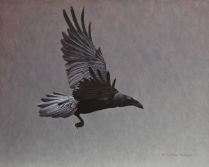 """Dark Wings - Raven,"" by W. Allan Hancock 16 x 20 - acrylic $2365 Unframed"