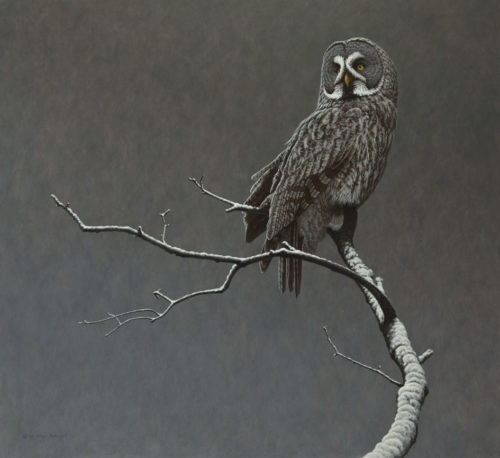 "SOLD ""Dead of Winter - Great Gray Owl,"" by W. Allan Hancock 33 x 36 - acrylic $5350 in show frame $4750 Unframed"