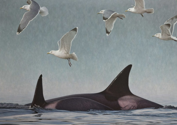 """Drawing a Crowd - Orcas and Gulls,"" by W. Allan Hancock 34 x 48 - acrylic $6500 Unframed"