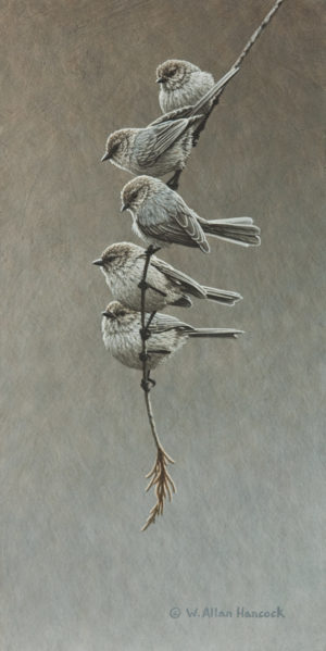 "SOLD ""A Five Cedar - Bushtits"" by W. Allan Hancock 7 x 14 - acrylic $1280 in show frame $1050 Unframed"