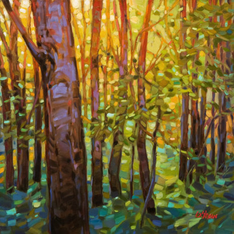 "SOLD ""Forest Light,"" by Graeme Shaw 20 x 20 - oil $1730 in show frame $1350 Unframed"