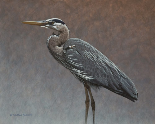 "SOLD ""Great Blue Heron Profile,"" by W. Allan Hancock 16 x 20 - acrylic $2600 in show frame $2150 Unframed"