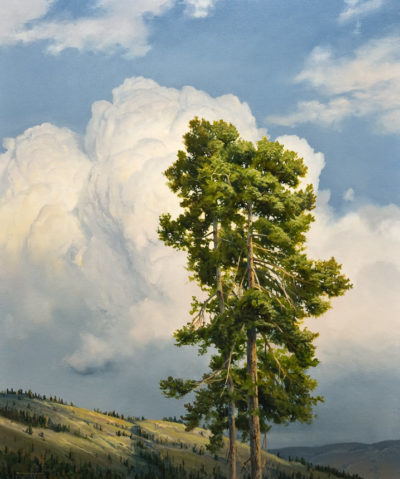 "SOLD ""Nicola Valley Pine,"" by Renato Muccillo 20 x 24 - oil $5100 in show frame"