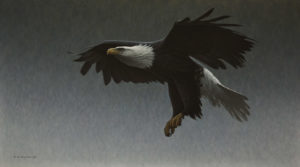 """Royal Descent - Bald Eagle,"" by W. Allan Hancock 20 x 36 - acrylic $3850 Unframed"