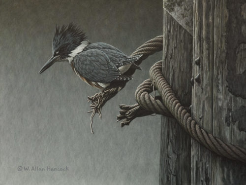 "SOLD ""Viewing Cable - Belted Kingfisher,"" by W. Allan Hancock 9 x 12 - acrylic $1380 in show frame $1150 Unframed"