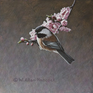 "SOLD ""Hanging Onto Spring - Chestnut-backed Chickadee,"" by W. Allan Hancock 6 x 6 - acrylic $500 Unframed $695 Custom framed"