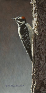 "SOLD ""High Marks - Downy Woodpecker"" by W. Allan Hancock 6 x 12 - acrylic $800 Unframed $1000 in show frame"