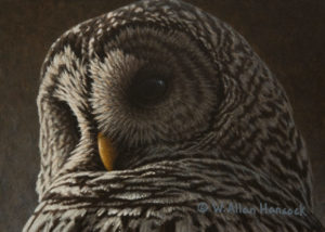 "SOLD ""Low Light - Barred Owl"" by W. Allan Hancock 5 x 7 - acrylic $500 Unframed $685 in show frame"