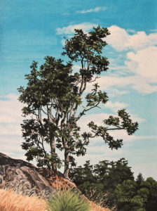 """Lone Oak,"" by Ron Parker 9 x 12 - oil $1350 Unframed"