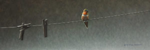 """Pins and Needle - Rufous Hummingbird,"" by W. Allan Hancock 8 x 24 - acrylic $1760 Unframed"