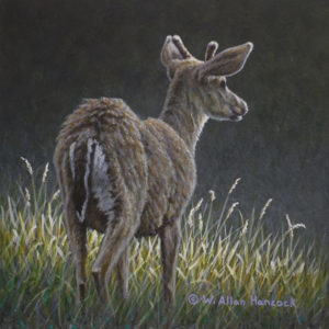 """On His Way - Black Tailed Deer"" by W. Allan Hancock 6 x 6 - acrylic $550 Unframed"