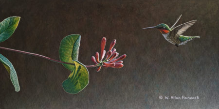 "SOLD ""On Approach - Ruby-throated Hummingbird,"" by W. Allan Hancock 7 x 14 - acrylic $1165 Unframed $1400 in show frame"
