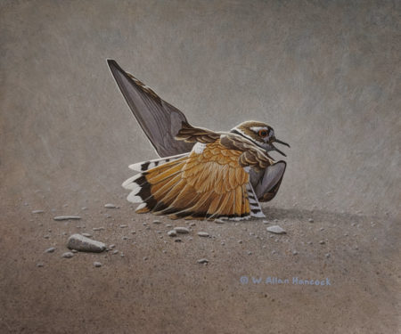 "SOLD ""Making a Scene - Killdeer,"" by W. Allan Hancock 10 x 12 - acrylic $1345 Unframed $1500 in show frame"