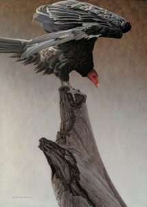"SOLD ""The Outlaw - Turkey Vulture,"" by W. Allan Hancock 20 x 28 - acrylic $3190 Unframed"