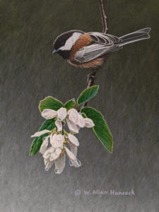 "SOLD ""Drop Zone - Chestnut -backed Chickadee,"" by W. Allan Hancock 6 x 8 - acrylic $660 Unframed $845 in show frame"