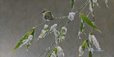 """SOLD """"Waiting Out the Season - Anna's Hummingbird""""(female), by W. Allan Hancock 7 x 14 - acrylic $1165 Unframed $1400 in show frame"""