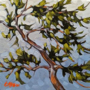 """Windblown Arbutus"" by Graeme Shaw 6 x 6 - acrylic $440 Unframed"
